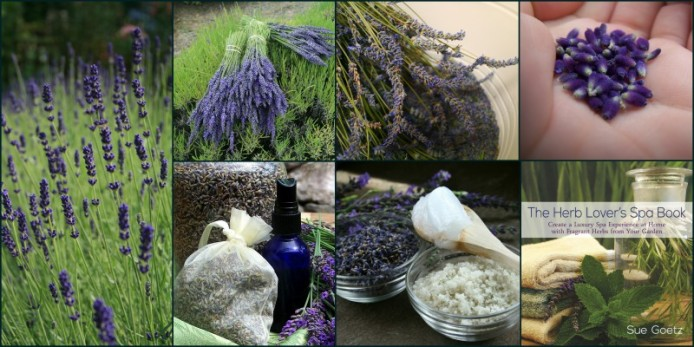lavender collage herb lovers