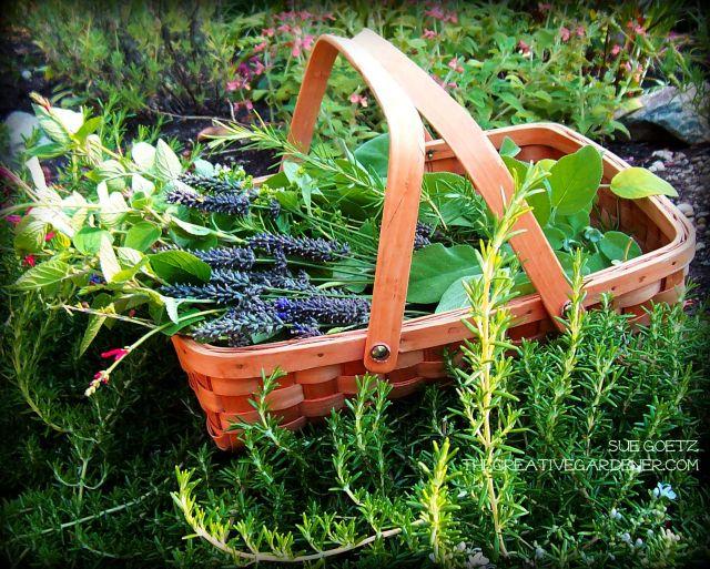 herbharvest2