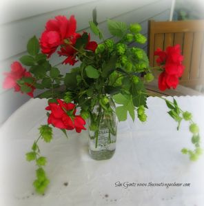 IMG_2510 hops and roses