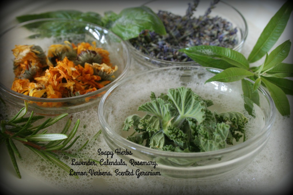soapy herbs