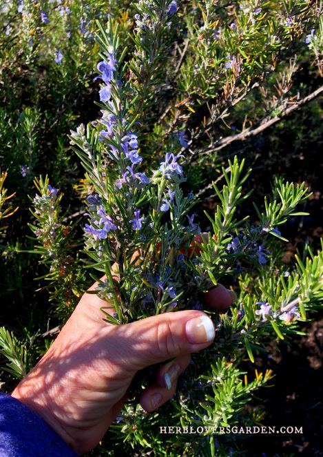 rosemary blog post flowers (1).jpg